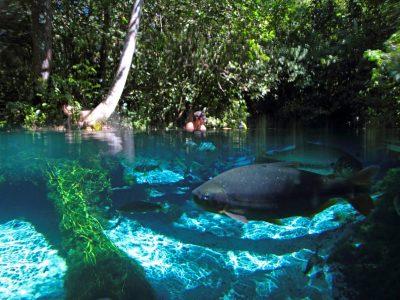 aquario-encantado-bom-jardim-nobres-46